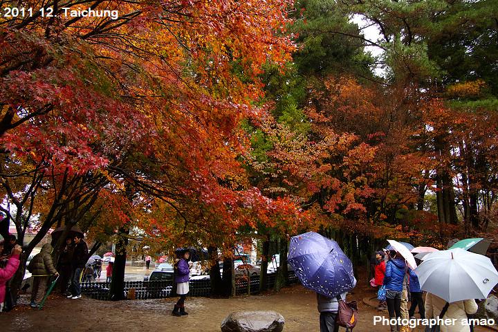 楓紅武陵、福壽山:1911344357.jpg