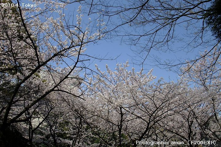 東京第四天:1679846479.jpg