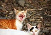 可愛狗與野猫: