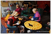 新埔-味衛佳柿餅:DSC_0047.jpg