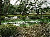 日本金澤兼六園:207金澤兼六園-落櫻~.jpg