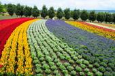 201908北海道:DSC_3773富田農場po.jpg