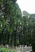 浮生散見:奮起湖最大的肖楠木林