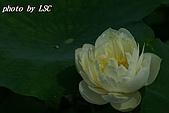 2007戀戀白荷:DSC04207