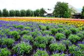 201908北海道:DSC_3749富田農場po.jpg