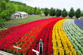201908北海道:DSC_3760富田農場po.jpg