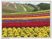 日本北海道:美瑛四季彩之丘