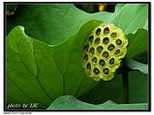 蓮比蓮氣死蓮:PICT0725