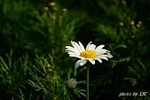 七甲花卉專區:DSC05309.JPG