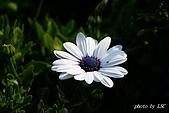 七甲花卉專區:DSC05313.JPG