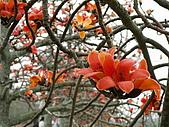 2005台灣詩路木棉花:PICT0548