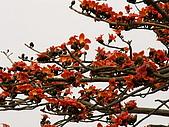 2005台灣詩路木棉花:春在枝頭已十分