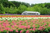 201908北海道:DSC_3823富田農場po.jpg