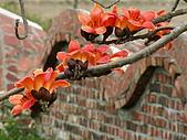 2005台灣詩路木棉花:雲牆上方的木棉