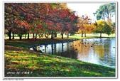 2018 基督城海格利公園:DSC_0861