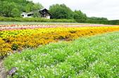 201908北海道:DSC_3820富田農場po.jpg