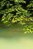花中之王牡丹花-驚豔杉林溪:DSC01255+.JPG