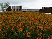 六十石山金針花:照片 223p.jpg