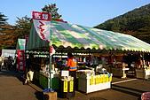 日本東北賞楓上:DSC08145-.jpg