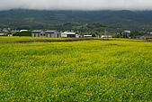 大地畫布油菜花:DSC06264+.JPG