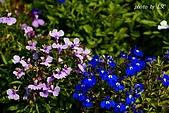 七甲花卉專區:DSC05306.JPG