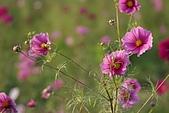 南台灣的小太陽:風中之花