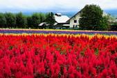 201908北海道:DSC_3782富田農場po.jpg