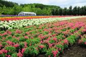 201908北海道:DSC_3827富田農場po.jpg