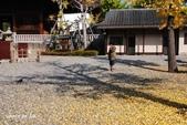 日本趴趴照:DSC_4098善光寺PO.jpg