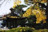 日本趴趴照:DSC_4131善光寺PO.jpg