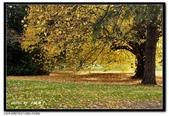 基督城海格利公園:DSC07824~.jpg