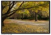 基督城海格利公園:DSC07836~.jpg