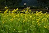 大地畫布油菜花:DSC06227+.JPG