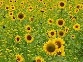 南台灣的小太陽:相互輝映