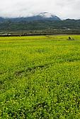 大地畫布油菜花:DSC06245+.JPG