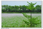 仁德--港尾溝溪滯洪池 布袋蓮花海:DSC_0979.jpg