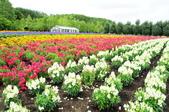 201908北海道:DSC_3742富田農場po.jpg