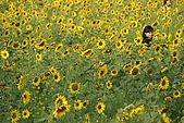 南台灣的小太陽:花海倩影