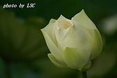 2007戀戀白荷:DSC03815