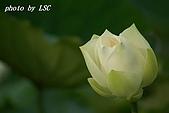 2007戀戀白荷:DSC03817