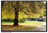 基督城海格利公園:DSC07812~.jpg