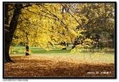 基督城海格利公園:DSC07818~.jpg