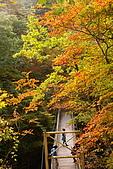 日本東北賞楓上:DSC08094-.jpg