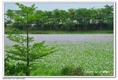 仁德--港尾溝溪滯洪池 布袋蓮花海:DSC_0981.jpg