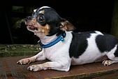 浮生散見:四月雪小徑的狗狗
