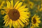 南台灣的小太陽:太陽臉譜