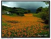 六十石山金針花:照片 298p.jpg