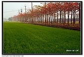 台南林初埤木棉花:DSC00128~.jpg