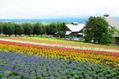 201908北海道:DSC_3759富田農場po.jpg
