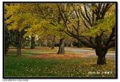 基督城海格利公園:DSC07839~.jpg